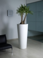 Image Result For Tall Skinny Plants