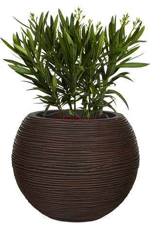 Fibre Clay Large Outdoor Planters Passion For Pots
