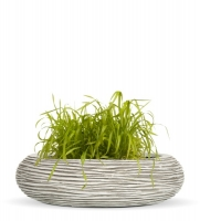 thumb_417_Ribbed_Ivory_Bowl_Grass_L.jpg